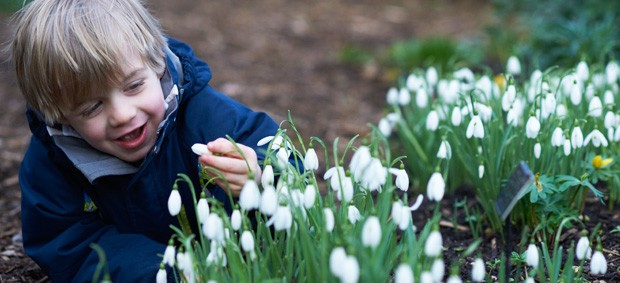 As one of the gardens who participate in the Scottish Snowdrop Festival, Scone Palace invite you to visit their 'Celebration of Snowdrops'.