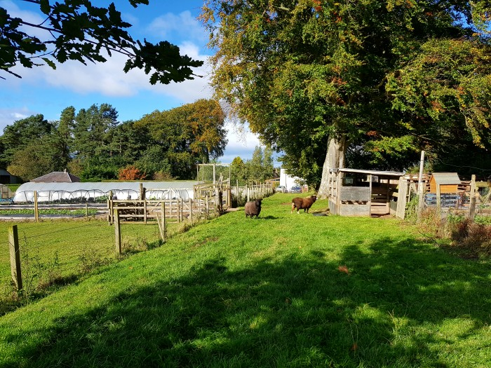 Southton Smallholding- looks idyllic, don't it?
