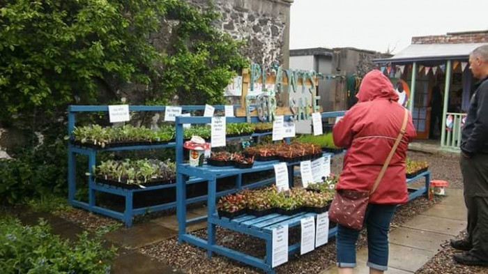 PKAVS Walled Garden - Second Plant Sale