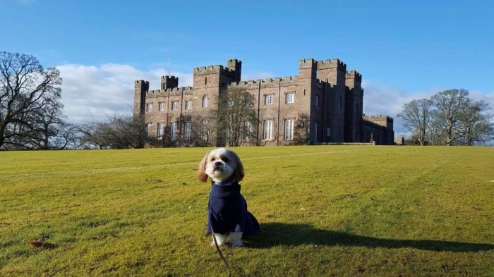Baxcter from Dog Friendly Perthshire at Scone Palace